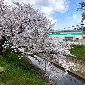2019桜_ヒロタ第二倉庫